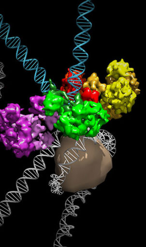 MMTV-protein