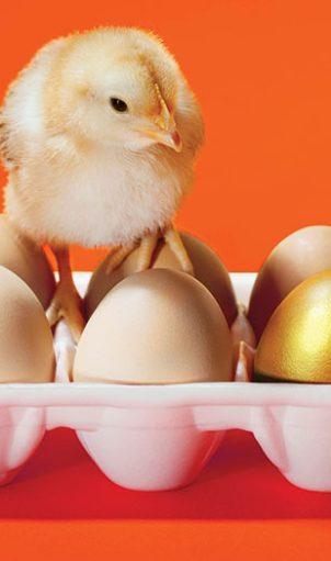 hatch-chicken-golden-egg-winter-2016