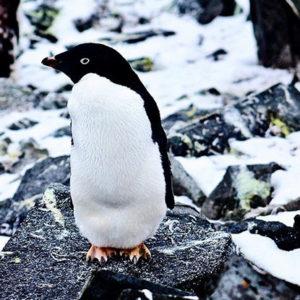 penguin-allison-randoph-instagram