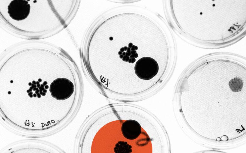 Beneficial bacteria in farming