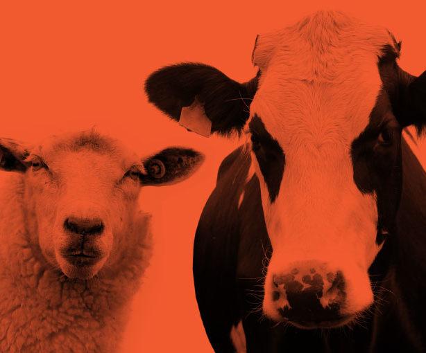 3-ascus-animal-nutrition